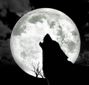 Howling wolf in front of full moon